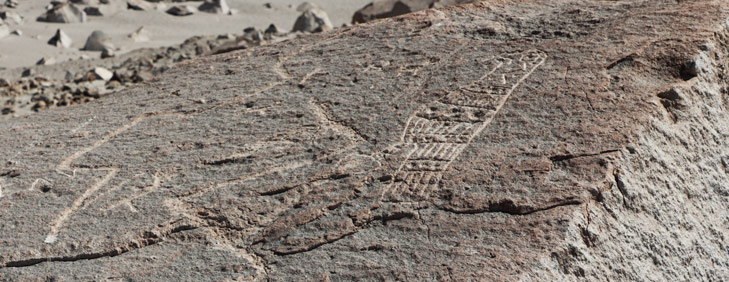 Toro Muerto Petroglyphs, Arequipa Attractions - My Peru Guide