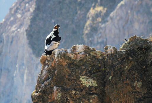Arequipa to Colca Canyon via El Pedregal - My Peru Guide