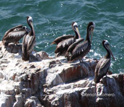 Paracas Natural Reserve