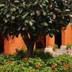 Santa Catalina Monastery, Arequipa Attractions - My Peru Guide