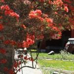 Maria Reiche Museum, Nasca, Ica Attractions - My Peru Guide
