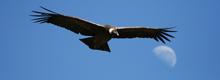 https://myperuguide.com/Condor Cross, Colca Canyon in Arequipa - My Peru Guide
